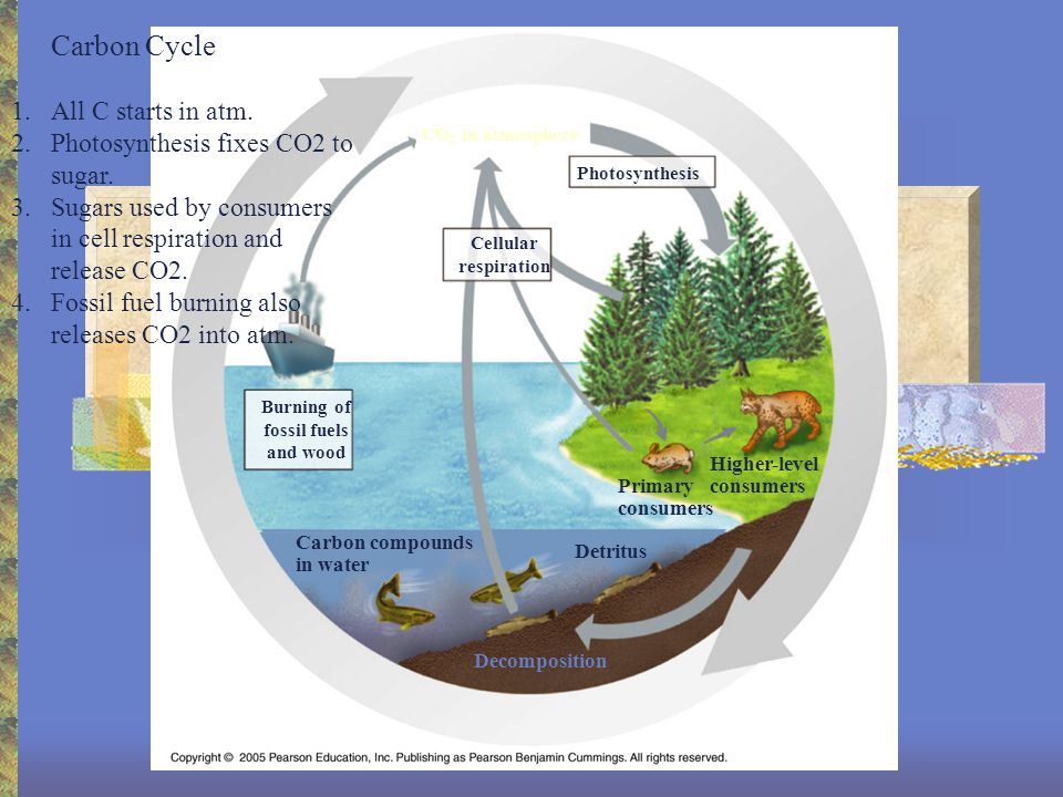 Ecosystems All the interacting communities is a given area, also involves abiotic factors.