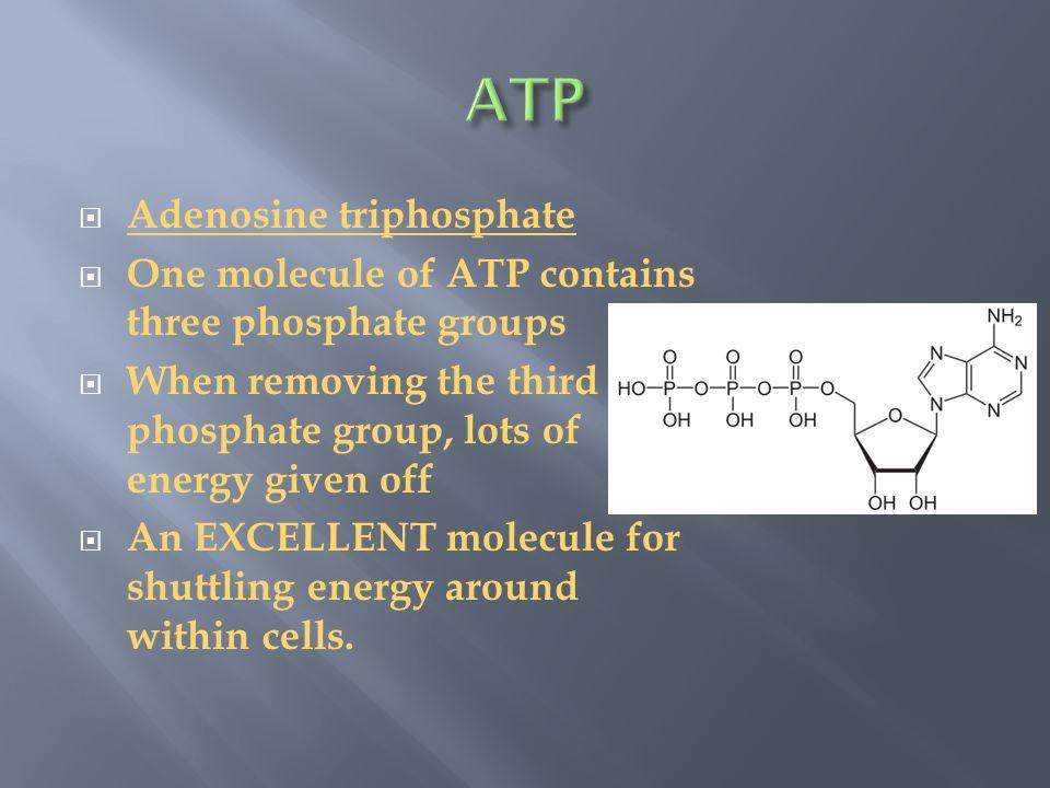 Nicotinamide adenine dinucleotide phosphate  NADPH is the reduced form of NADP+.