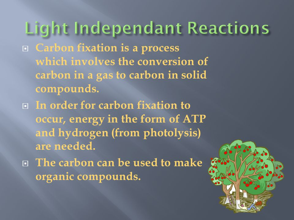  The carbon of a CO 2 molecule from the atmosphere is attached to a 5-carbon sugar called RuBP  This forms an unstable 6-carbon compound  The 6-carbon compound breaks down to form two 3-carbon molecules called PGAL(phosphoglyceraldehyde)  Think of PGAL as half a glucose