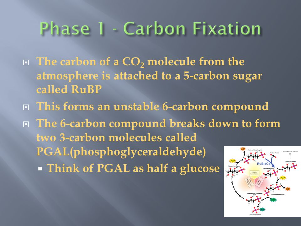  The 3 PGAL are converted to G3P using energy (ATP) and hydrogens from NADPH from the Light Reaction  For every 3 molecules of CO 2 there are 6 molecules of G3P produced  Only 1 is net gain  What happens to the other 5.