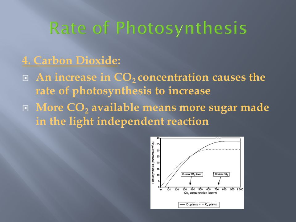  In hot, dry environments plants maximize photosynthesis by limiting water loss.