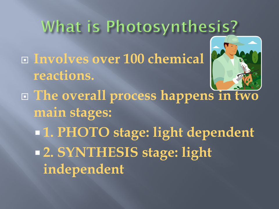  Splits water and produces ATP. Photosystem reactions need light energy.