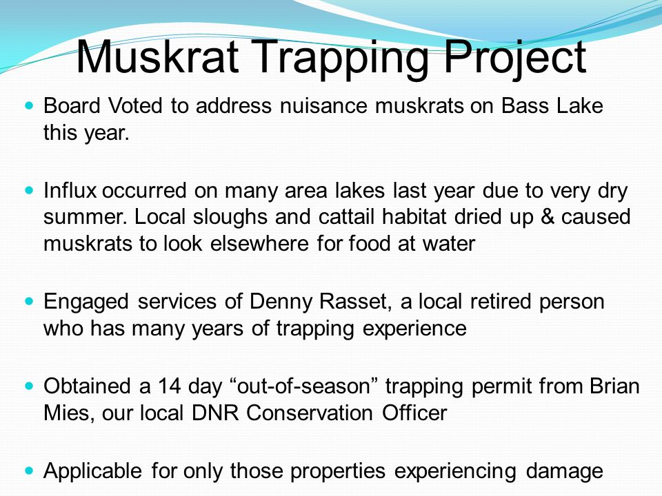 Muskrat update continued Agreed to pay Denny $10 for each muskrat trapped 18 Muskrats trapped & given to the DNR during permit period Official in-season trapping period begins the first full week of November Denny has agreed to return and continue trapping this fall Has requested a list of addresses where muskrats runs have been spotted near the lake shore Send email to Jim Dvorak (Jdvorak12@yahoo.com)