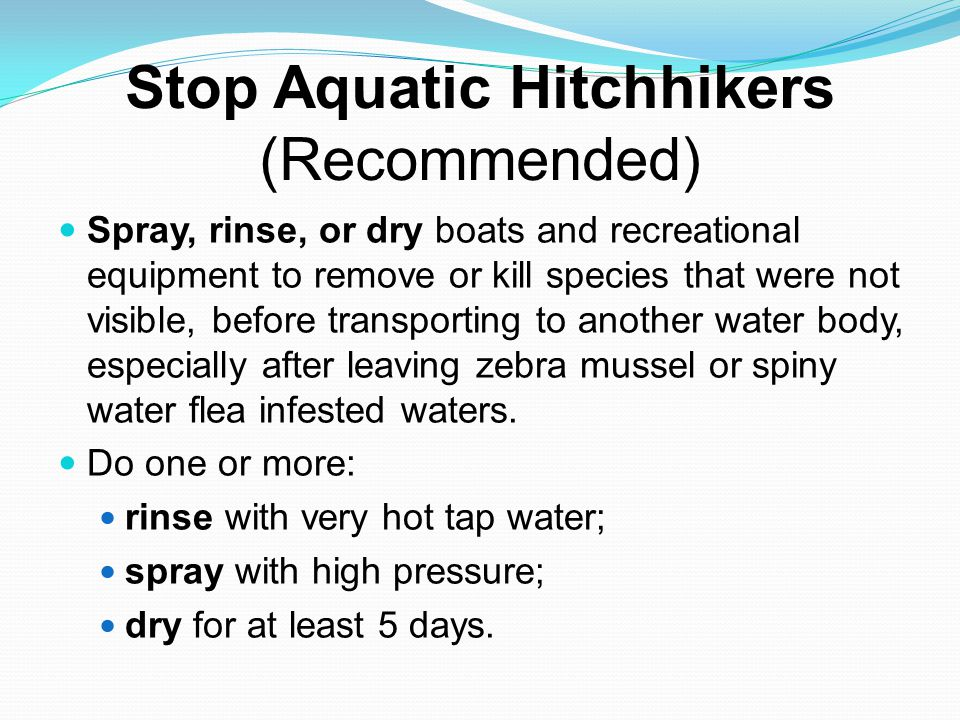 Stop Aquatic Hitchhikers (cont.) For more AIS (aquatic invasive species) information, contact the DNR Invasive Species Program, Ecological and Water Resources, at (651) 259-5100 or (888) 646-6367 or visit www.mndnr.gov/AIS