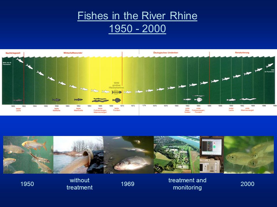 Current tasks in the Rhine basin Second Rhine Action programme –2000 – 2020 –sustainable development of the river improvement of ecosystems –e.g.