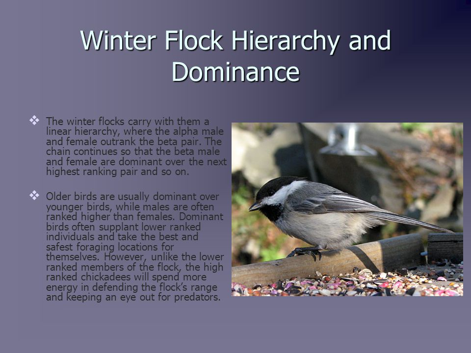 Winter Flock Exceptions   Winter wanderers are birds that almost always belong to a winter flock, but have an unusually large range.