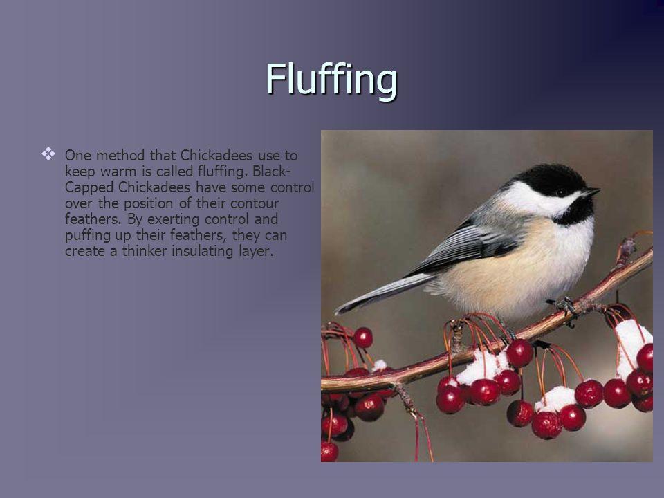 Behavior Changes   Food storage   Winter feeding   Roosting habits   Activity in the cold   Formation of winter flocks   Irruption and vertical migration