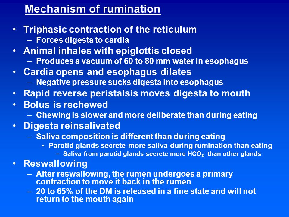 Control of rumination Controlled by tactile receptors (epithelial receptors) near the cardiac sphincter, reticuloruminal fold and anterior sac Stimulated by scratching of feed against the rumen wall Reflex is semiautomatic –Can be stopped anytime EEG resembles sleeping