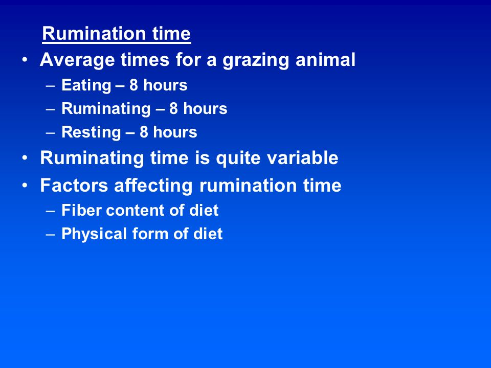 Effects of diet on rumination Increasing the proportion of grain in the diet will decrease rumination Chews/day Hay 50,100 Dried grass 36,100 Concentrate 11,000 Increasing the maturity of the forage in a diet will increase rumination Decreasing the particle size of the diet will decrease the rumination time Increasing feed intake will reduce the rumination time per gm of feed consumed Cattle ruminate less per kg NDF than sheep or goats