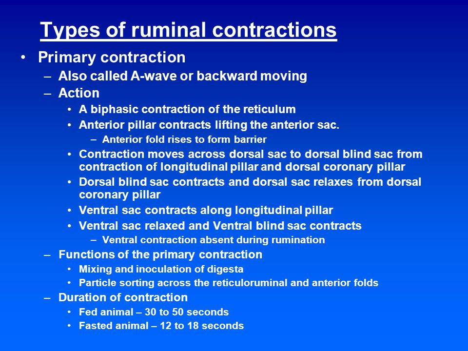 The primary contraction of the rumen