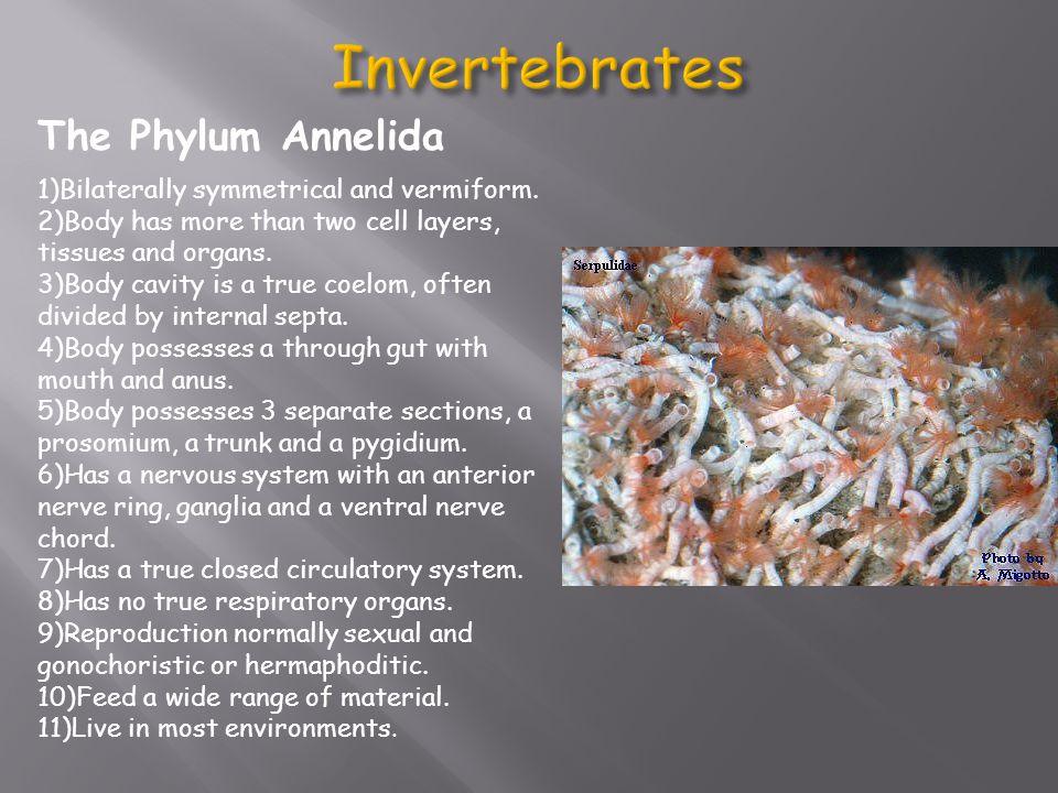 The Phylum Arthropoda 1)Bilaterally symmetrical (in most cases).