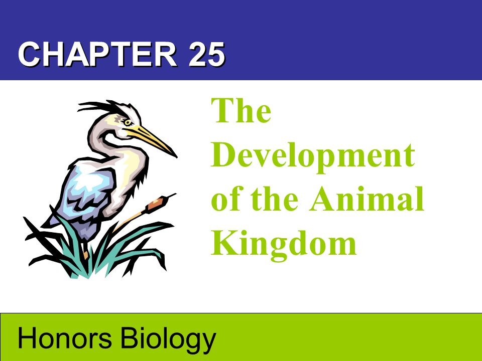 Animals –Are eukaryotic, multicellular, heterotrophic organisms that obtain nutrients by ingestion –Digest their food within their bodies What Is an Animal.
