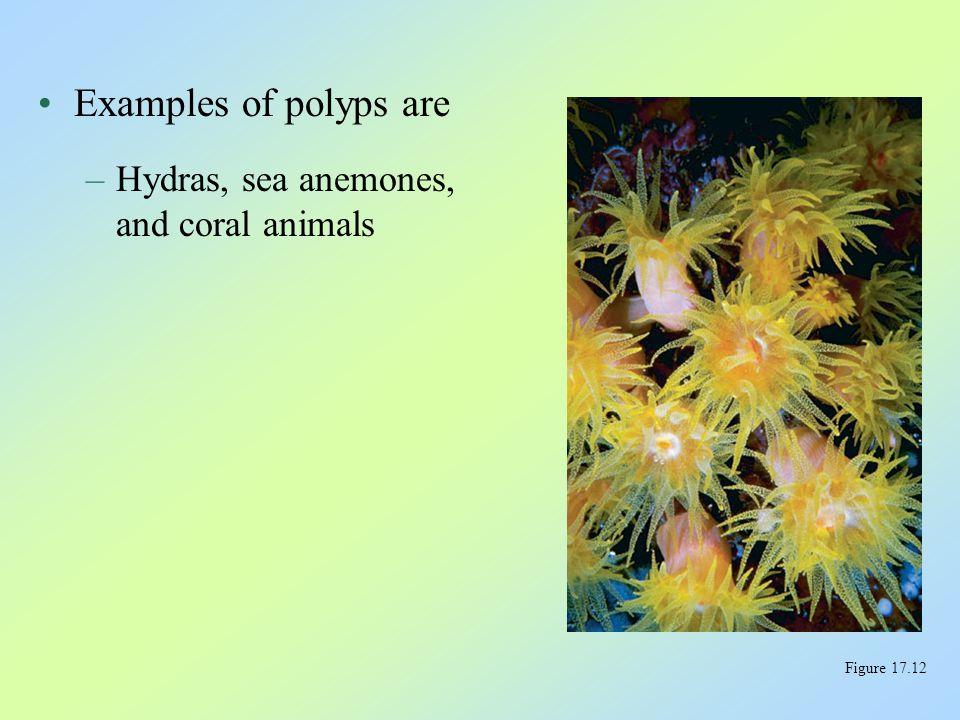 The organisms we call jellies are medusas