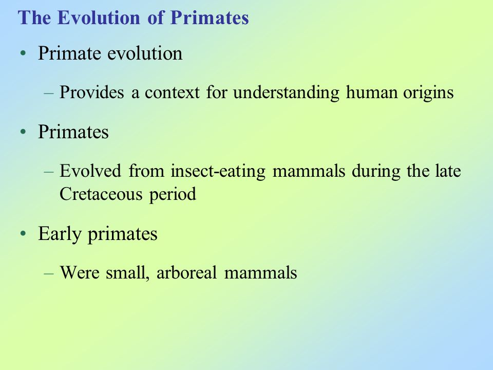 The distinguishing characteristics of primates were shaped by the demands of living in trees –Limber shoulder joints –Eyes in front of the face –Excellent eye-hand coordination –Extensive parental care Figure 17.39
