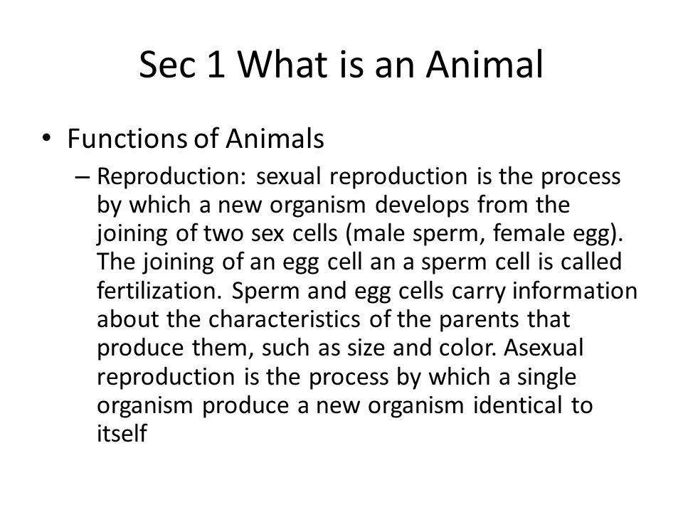 Sec 1 What is an Animal Classification of Animals – Classifying, or sorting animals into categories, helps biologists make sense of this diversity.