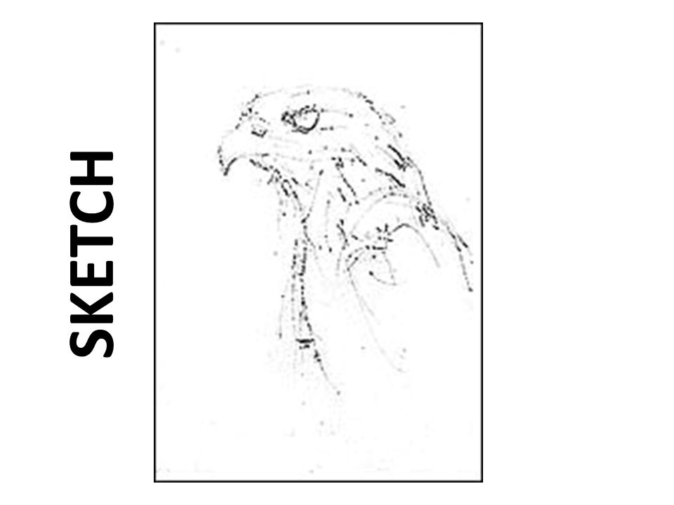 Base Layer/Beak