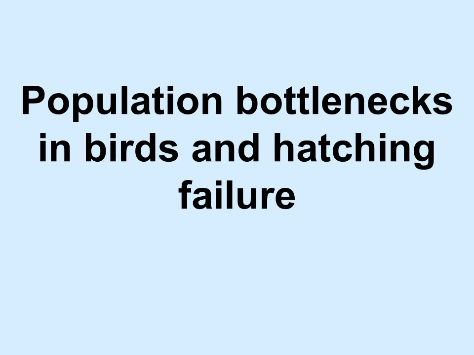 Based on the following study: Hatching failure increases with severity of population bottlenecks in birds.