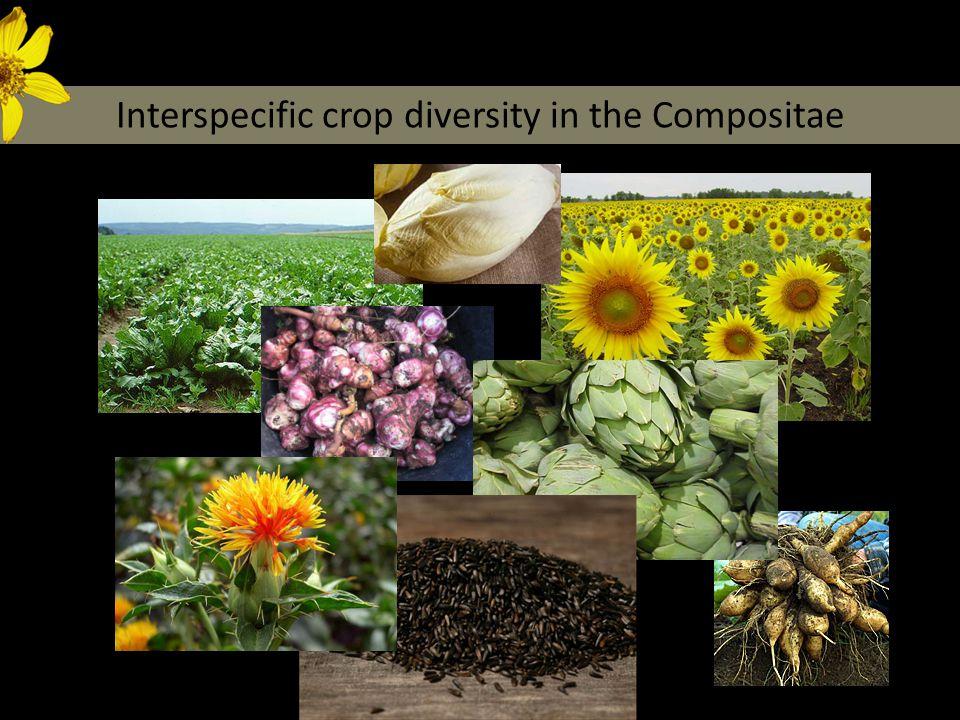 Crop diversity in the Compositae Dempewolf et al.