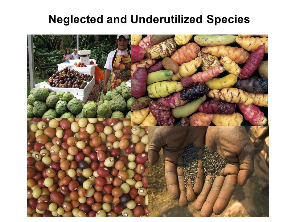 What are neglected and underutilized species.