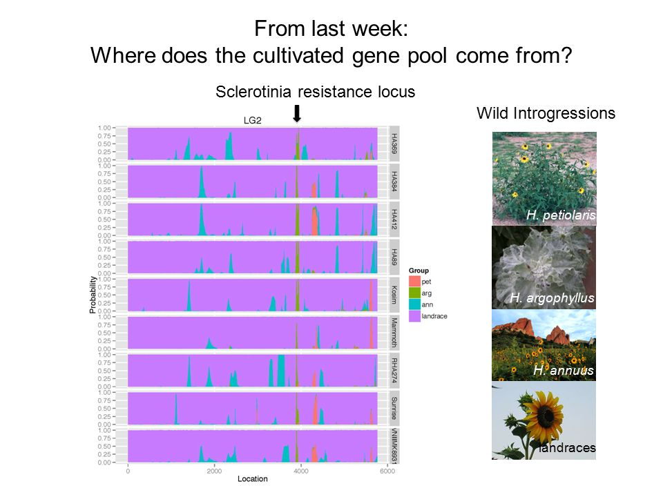 Major uses of crop diversity Interspecific diversity (crop wild relatives) as well as intra- specific diversity are an important source for new alleles (such as disease resistance) in crop improvement efforts.