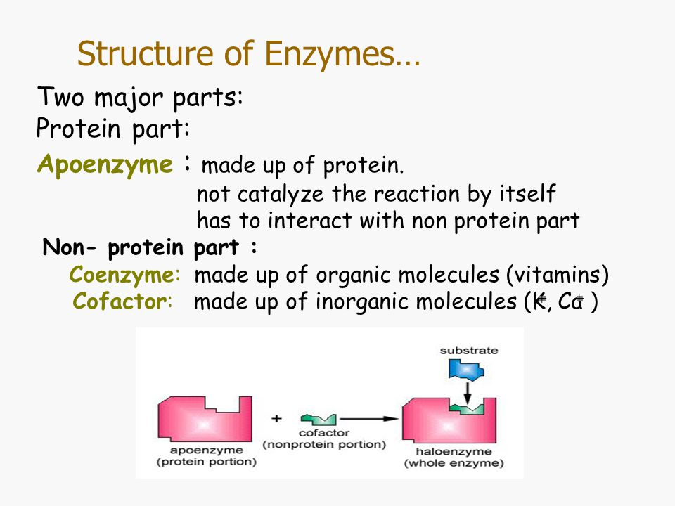 Structure of Enzymes… Substrate:The molecule which enzyme acts on Active site: Specific region on the enzyme that substrate binds Lock and key Enzyme –Substrate Complex