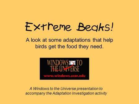 Extreme Beaks! A look at some adaptations that help birds get the food they need. A Windows to the Universe presentation to accompany the Adaptation Investigation.