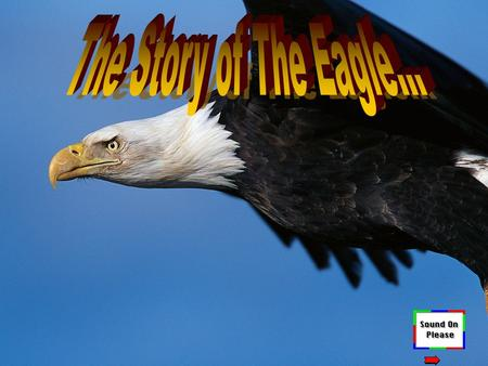 The Story of The Eagle….