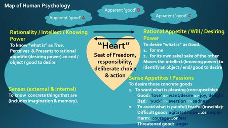 Map of Human Psychology Rational Appetite / Will / Desiring Power To desire what is as Good. 1.for me 2.for its own sake/ sake of the other Moves the intellect.