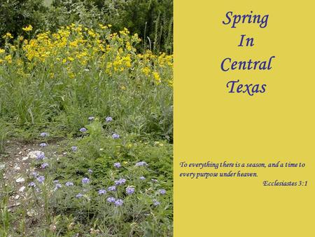 Spring In Central Texas To everything there is a season, and a time to every purpose under heaven. Ecclesiastes 3:1.