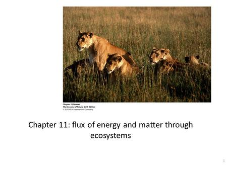 Chapter 11: flux of energy and matter through ecosystems 1.