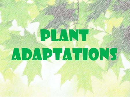 PLANT ADAPTATIONS. RAIN FORESTS Tropical rain forests are dense, which is why leaves have adapted to try to capture as much light as possible. Leaves.
