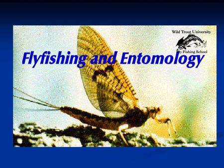 Wild Trout University Fly-fishing Schools Fly-fishing Guide to BASIC TROUT STREAM ENTOMOLOGY or What Do Trout Really Eat? Copyright 1959-2013 Will Daskal.