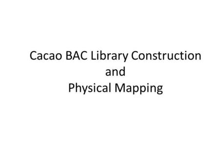 Cacao BAC Library Construction and Physical Mapping.