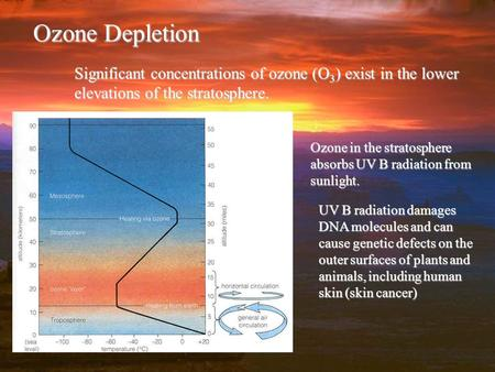 Ozone Depletion Significant concentrations of ozone (O 3 ) exist in the lower elevations of the stratosphere. Ozone in the stratosphere absorbs UV B radiation.