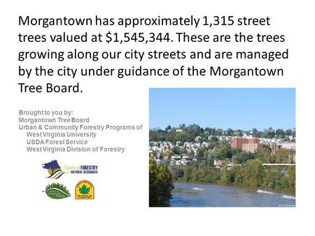 Morgantown has approximately 1,315 street trees valued at $1,545,344. These are the trees growing along our city streets and are managed by the city under.