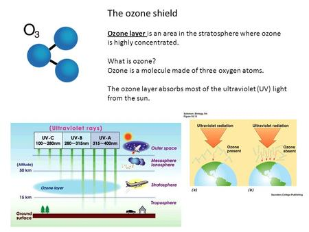 The ozone shield Ozone layer is an area in the stratosphere where ozone is highly concentrated. What is ozone? Ozone is a molecule made of three oxygen.