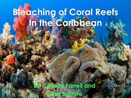 Bleaching of Coral Reefs In the Caribbean By Colleen Farrell and Leah Salituro.