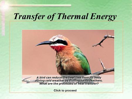Transfer of Thermal Energy A bird can reduce the heat loss from its body during cold weather by fluffing up its feathers. What are the processes of heat.