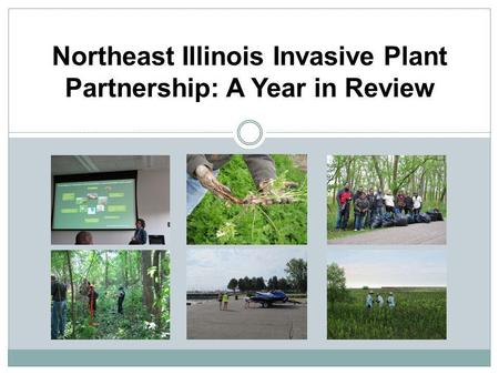 Northeast Illinois Invasive Plant Partnership: A Year in Review.