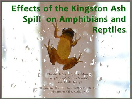 Effects of the Kingston Ash Spill on Amphibians and Reptiles.