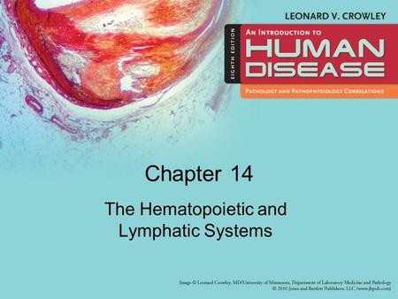 Chapter 14 The Hematopoietic and Lymphatic Systems.