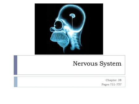Nervous System Chapter 38 Pages 731-757. Nerve Cell Neurons or nerve cells - receive, process, transmit information Glia - which assist neuron function.