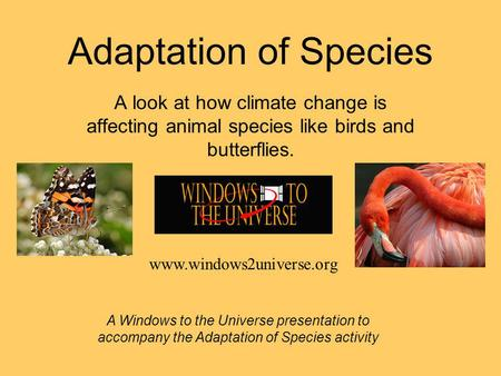 Adaptation of Species A look at how climate change is affecting animal species like birds and butterflies. A Windows to the Universe presentation to accompany.