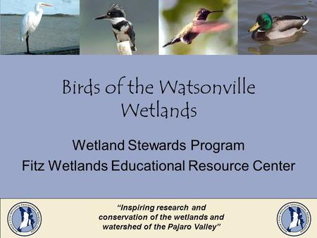 Birds of the Watsonville Wetlands Wetland Stewards Program Fitz Wetlands Educational Resource Center Inspiring research and conservation of the wetlands.