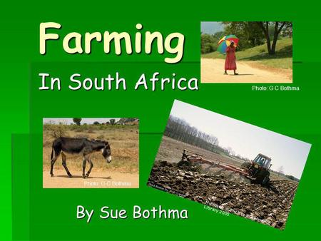 Farming In South Africa By Sue Bothma Photo: G C Bothma