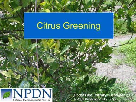Citrus Greening Roberts and Brlansky. December 2007. NPDN Publication No. 0025.