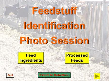 Feedstuff Identification Photo Session Quit Feed Ingredients Processed Feeds Return to Main Menu Return to Main Menu.