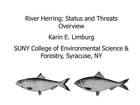 River Herring: Status and Threats Overview Karin E. Limburg SUNY College of Environmental Science & Forestry, Syracuse, NY.