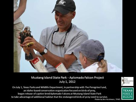 Mustang Island State Park - Aplomado Falcon Project July 1, 2012 On July 1, Texas Parks and Wildlife Department, in partnership with The Peregrine Fund,