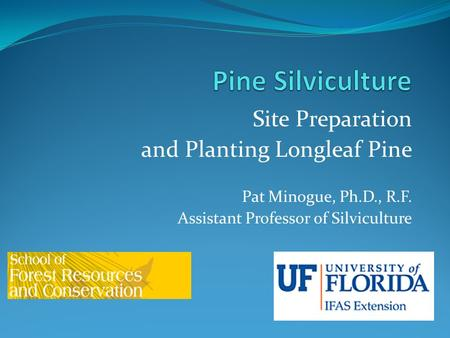 Pine Silviculture Site Preparation and Planting Longleaf Pine